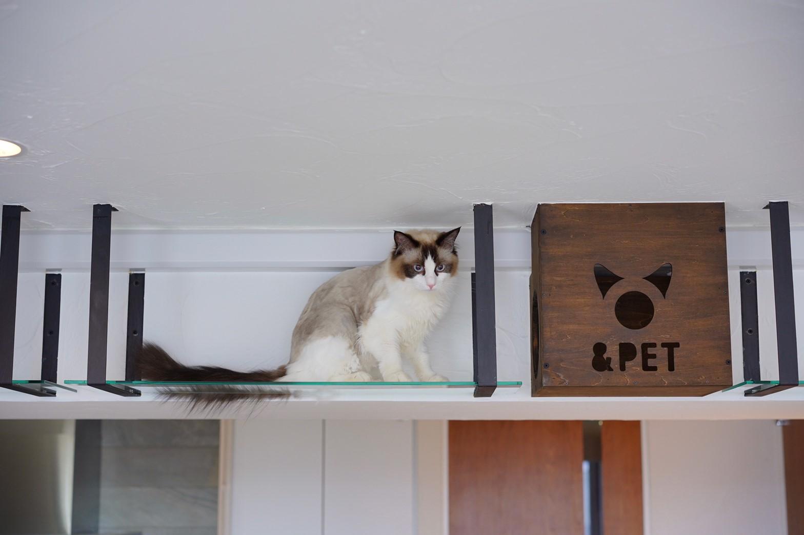 棚の上にいる猫