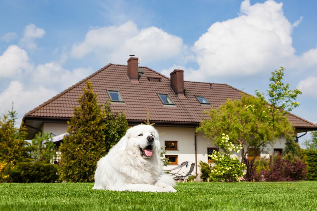 ほのぼのと日向ぼっこをする犬