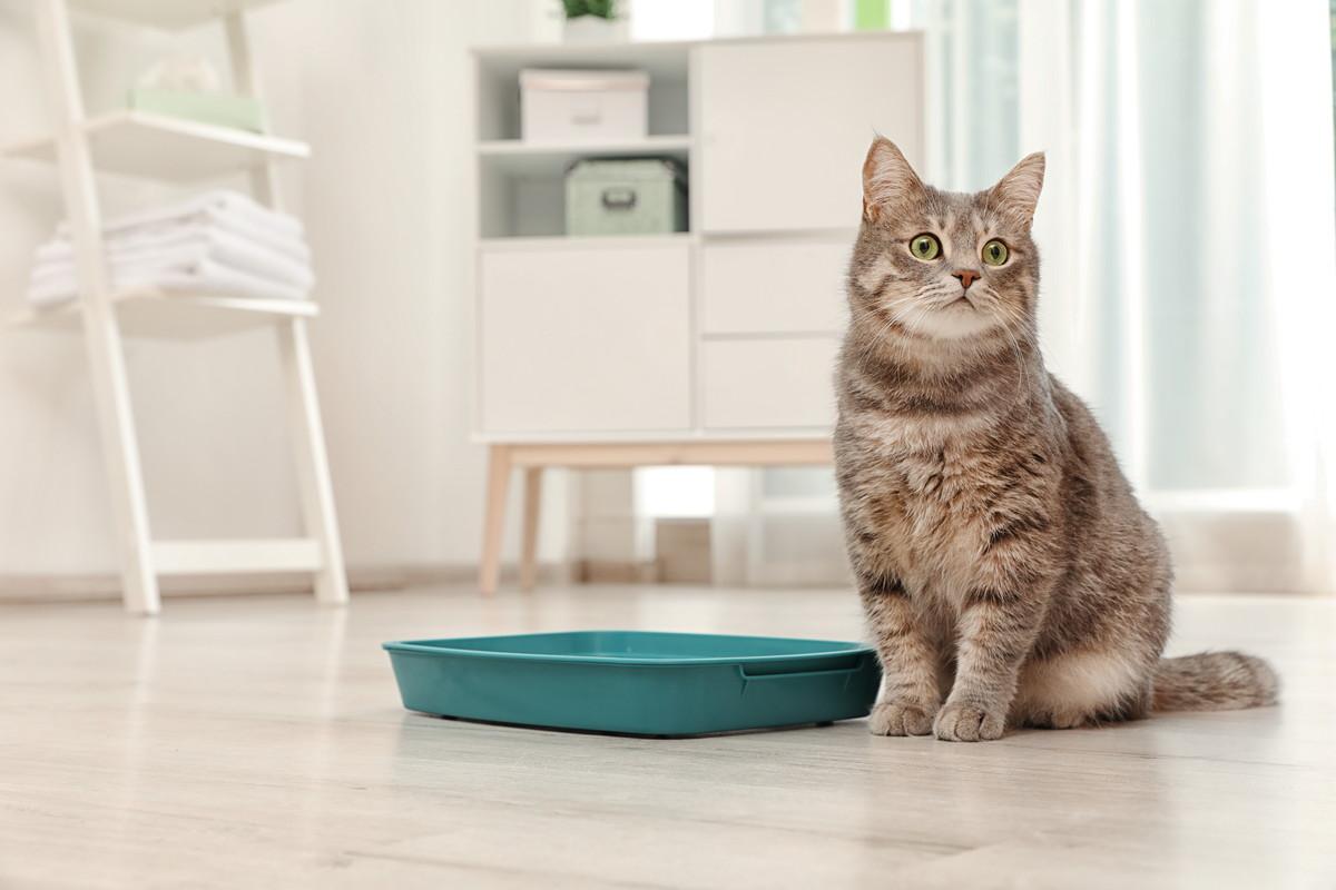 【横浜市中区】ペットと暮らす家のリフォームアイディア 猫の習性について